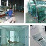 Nhận cắt kính giá rẻ theo yêu cầu tại quận Tân Bình Tphcm